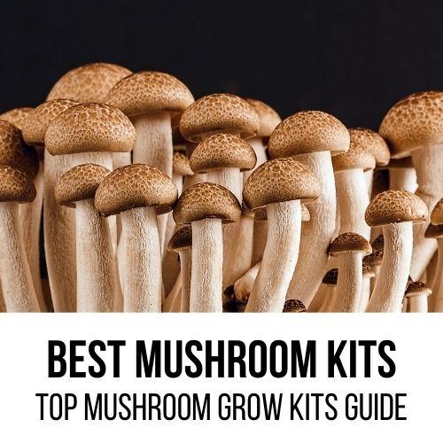 Best Mushroom Grow Kits